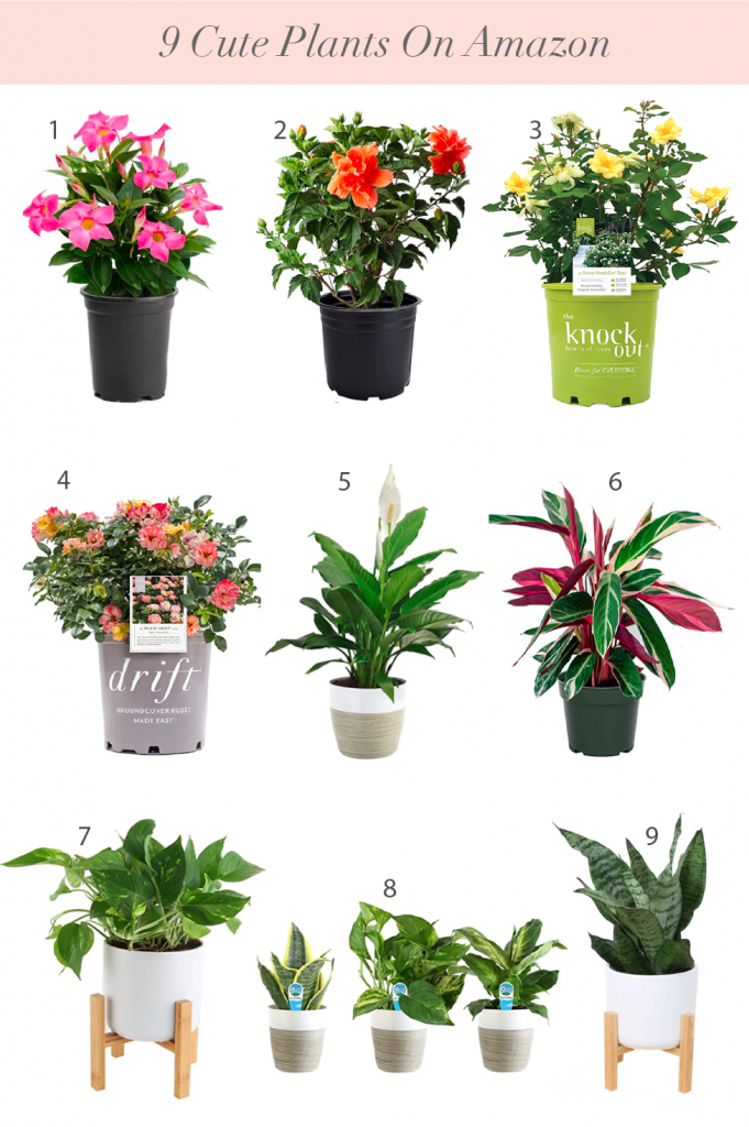 9 Cute Plants on Amazon